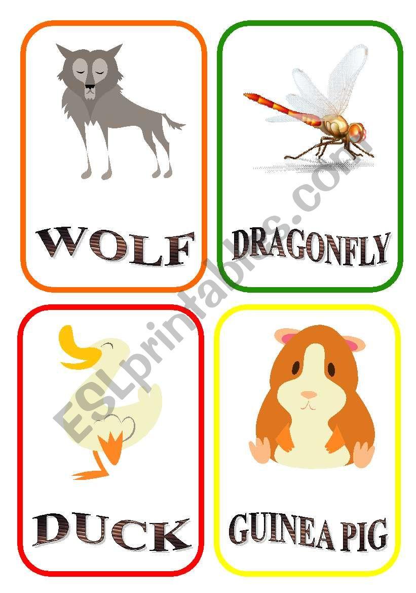 ANIMAL FLASH-CARDS - PART 10 - LAST PART!