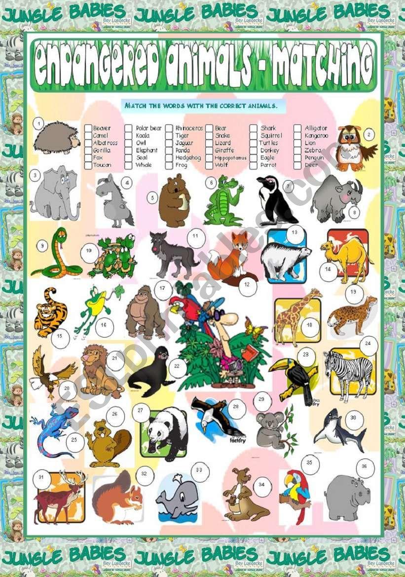 Endangered Animals - Matching worksheet