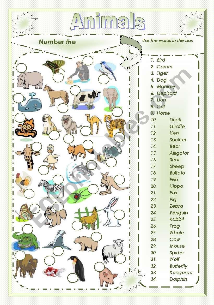 Animals vocabulary worksheet