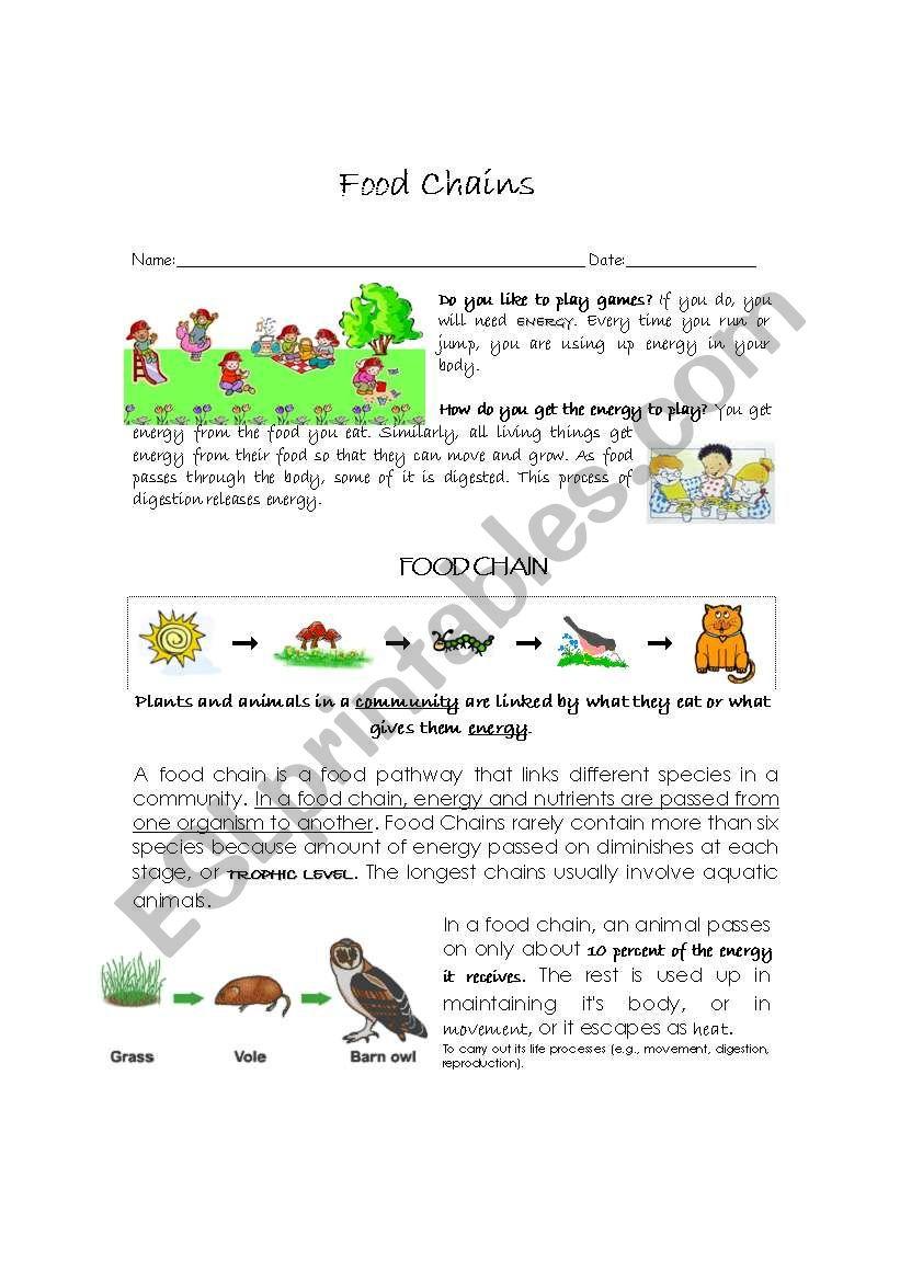 Food chain   ESL worksheet by fidull
