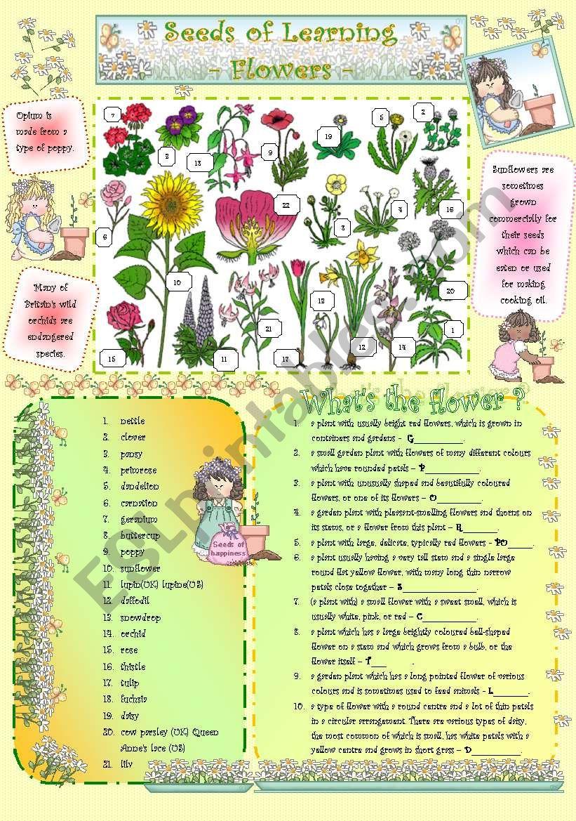 Seeds of Learning - Flowers - worksheet