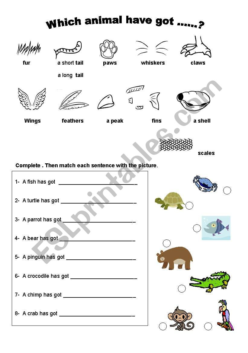 animal body parts esl worksheet by leandrag. Black Bedroom Furniture Sets. Home Design Ideas