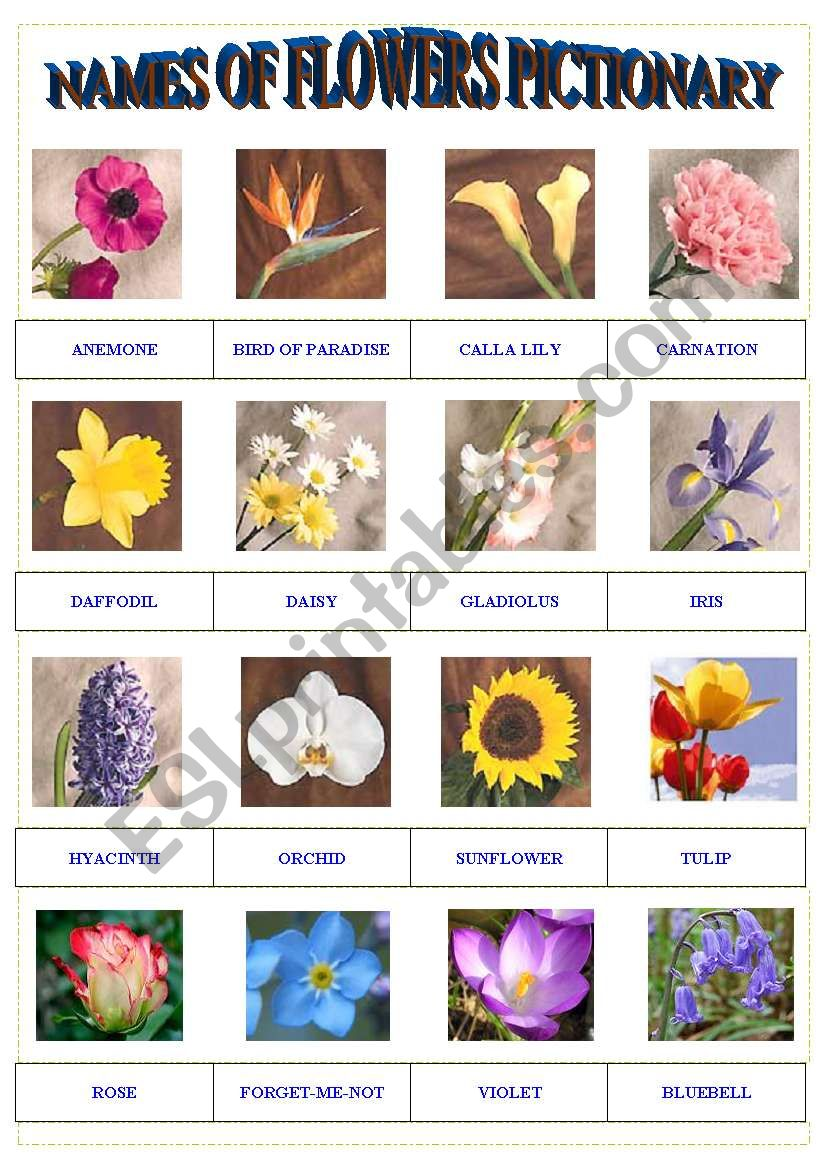 Names of Flowers Pictionary worksheet