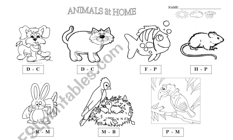 animals - Pets worksheet