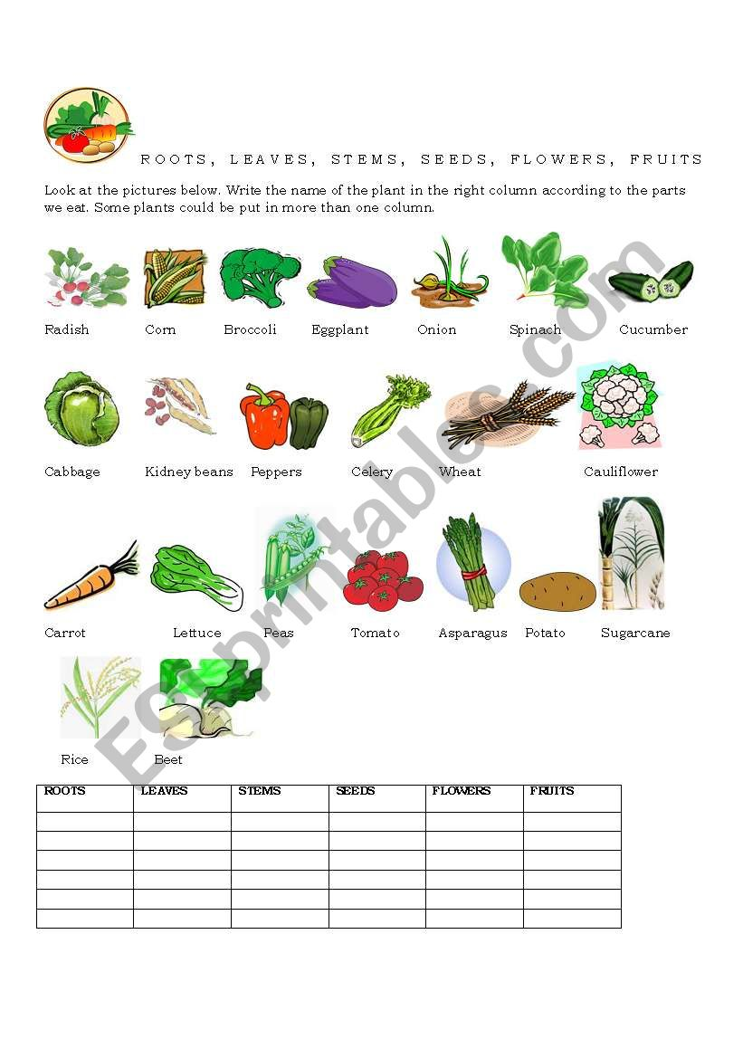 FOOD -PARTS OF THE PLANT - ESL worksheet by hrianov