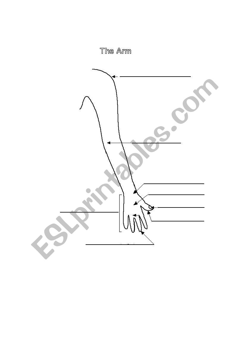 English worksheets: Label the parts of the arm