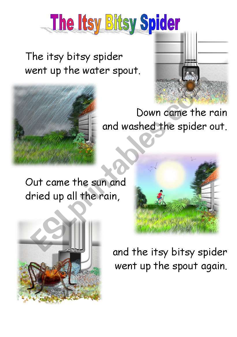 the itsy bitsy spider  worksheet