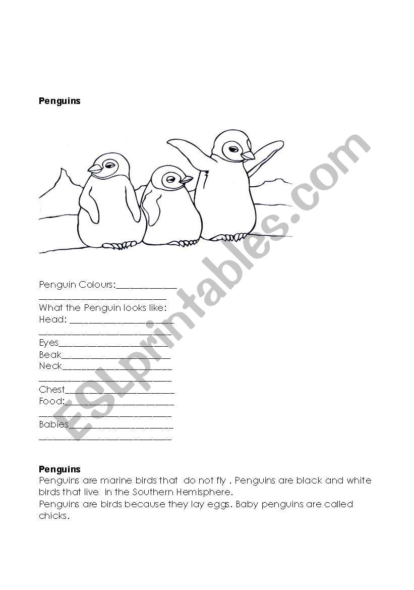 polar animals worksheet
