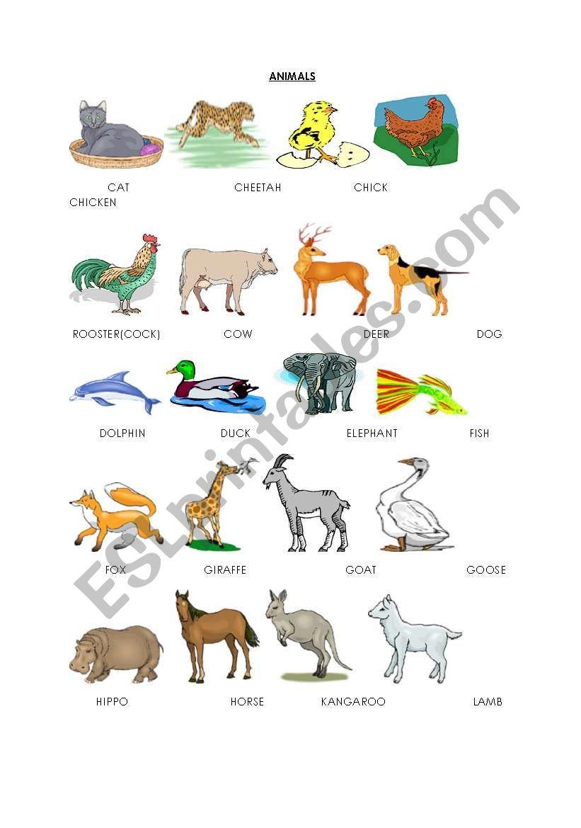 animals(pictionary) worksheet