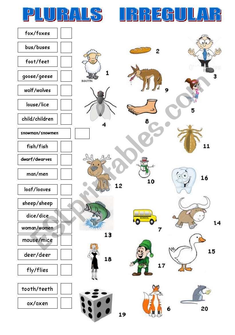 PLURALS IRREGULAR worksheet