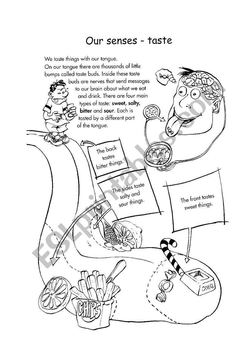 The Five Senses - Taste worksheet