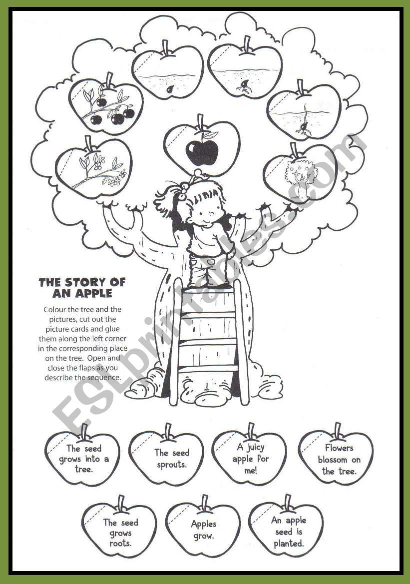 The story of an apple worksheet