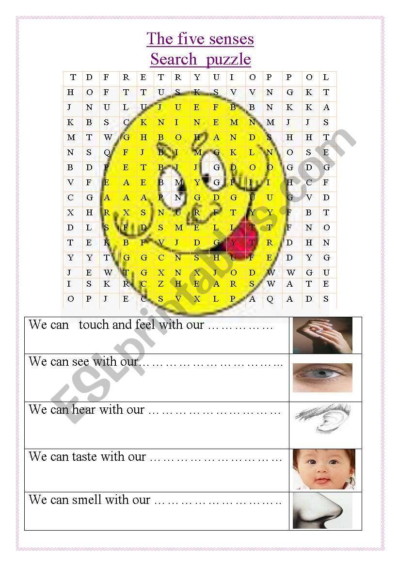 the five senses worksheet