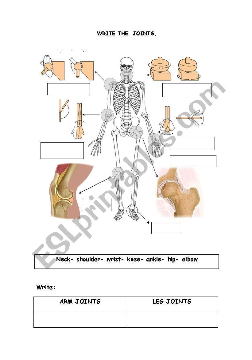 worksheet Joints Worksheet english worksheets the joints worksheet