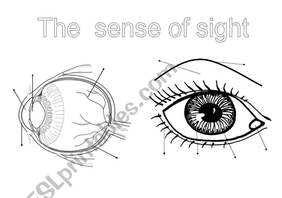 The senses (1): the sight worksheet