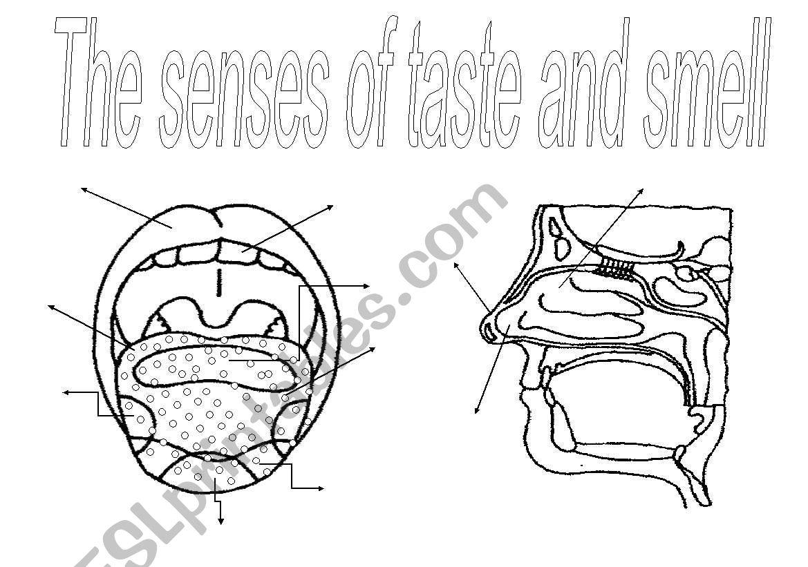 The senses (3): taste and smell