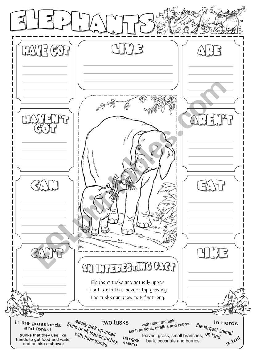 Describing Elephants worksheet