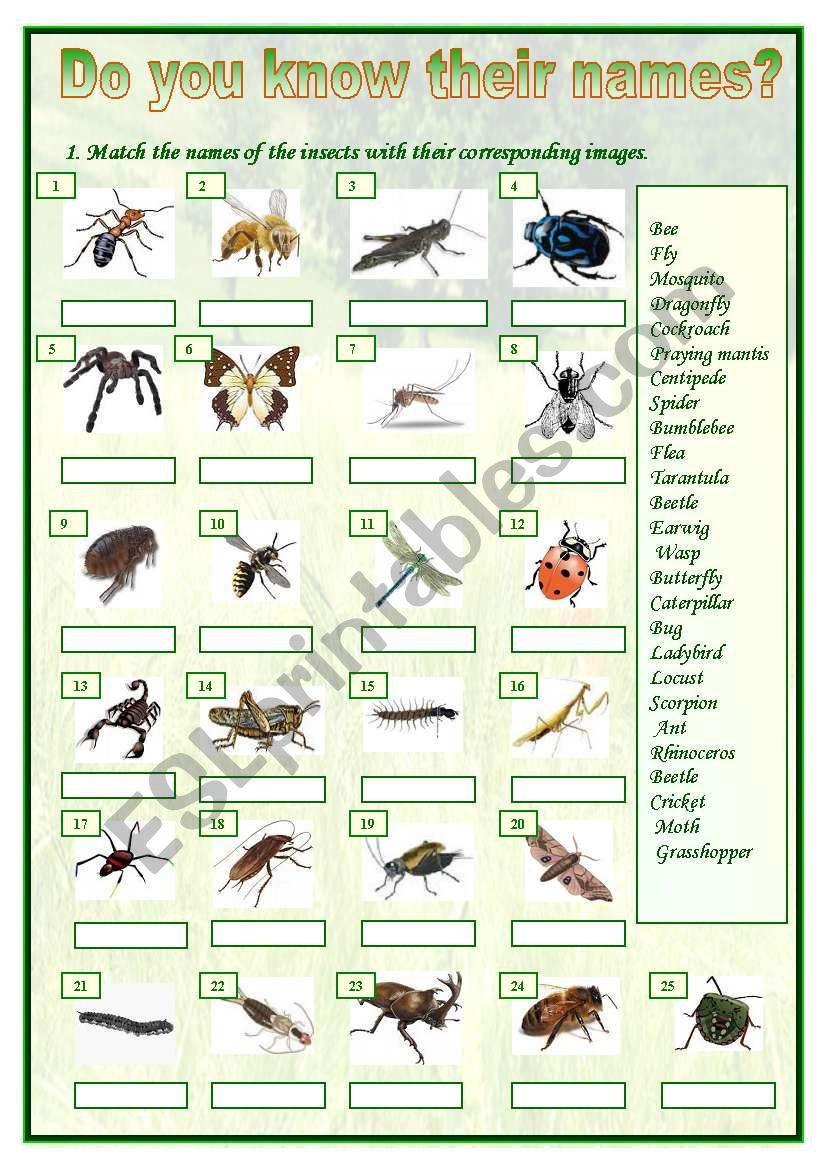 Insects matching worksheet