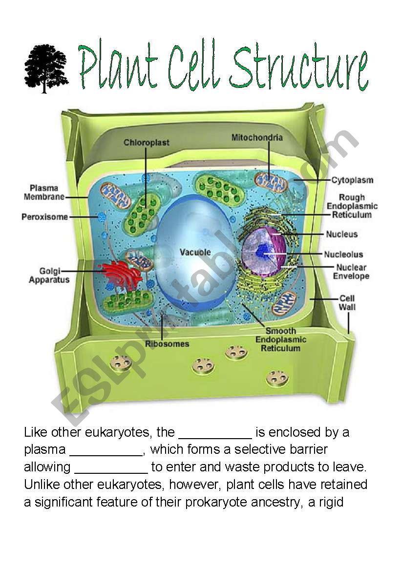 Plant Cell Structure - ESL worksheet by stuartallen77