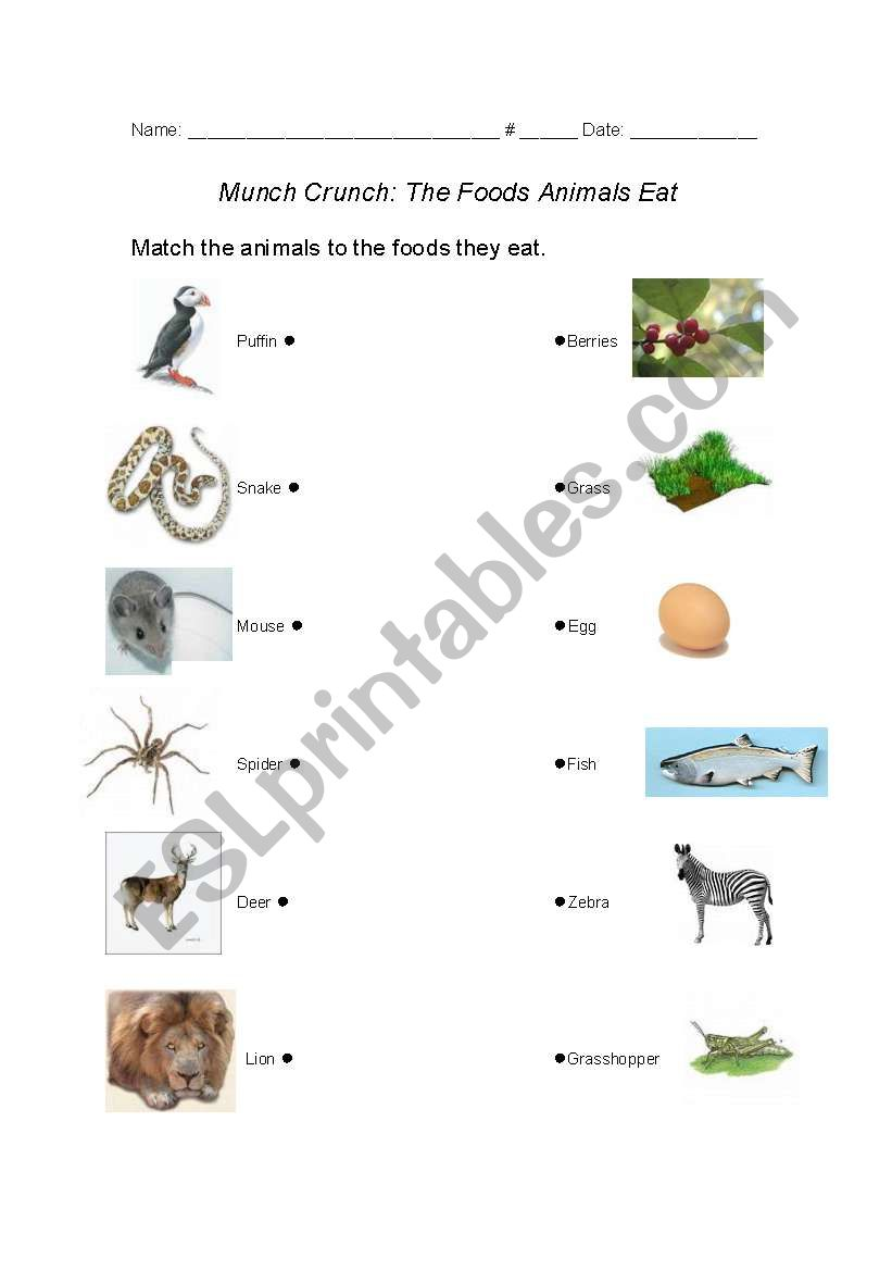 english worksheets foods animals eat. Black Bedroom Furniture Sets. Home Design Ideas