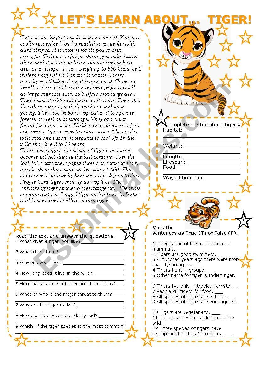 LET´S LEARN ABOUT... TIGER! (2 PAGES with key)