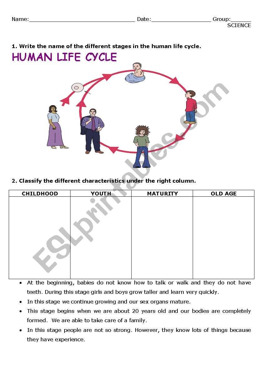 English worksheets: human life cycle