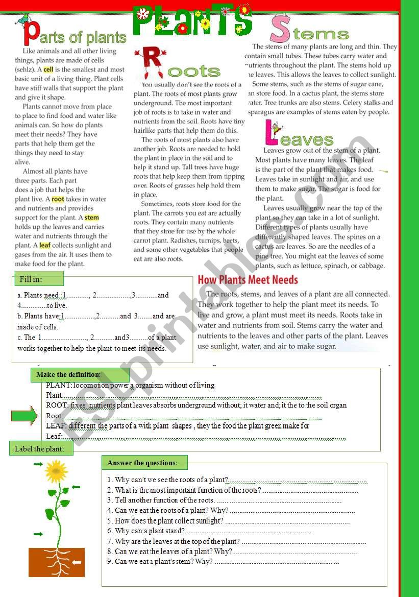 The science lesson- PLANTS worksheet