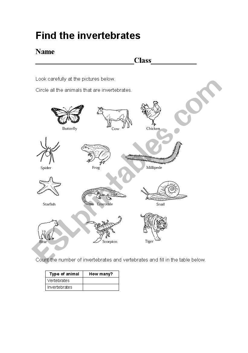 English worksheets: ve...
