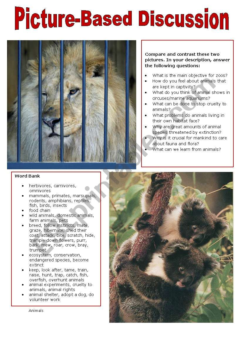 Picture-Based Discussion (3): Animals