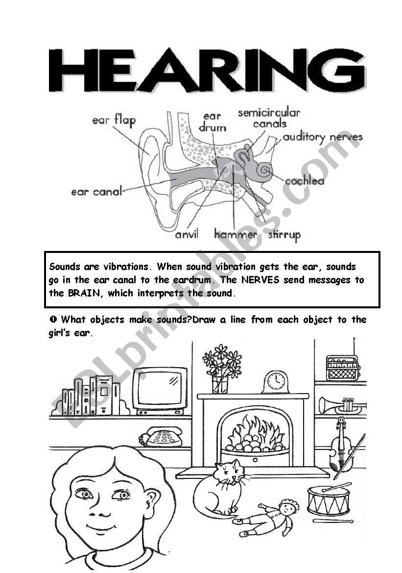 5 senses (4th part) worksheet