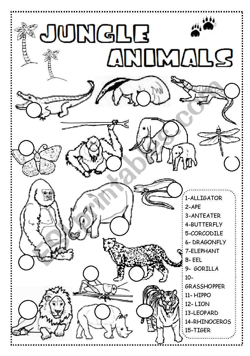 JUNGLE ANIMALS WORKSHEET