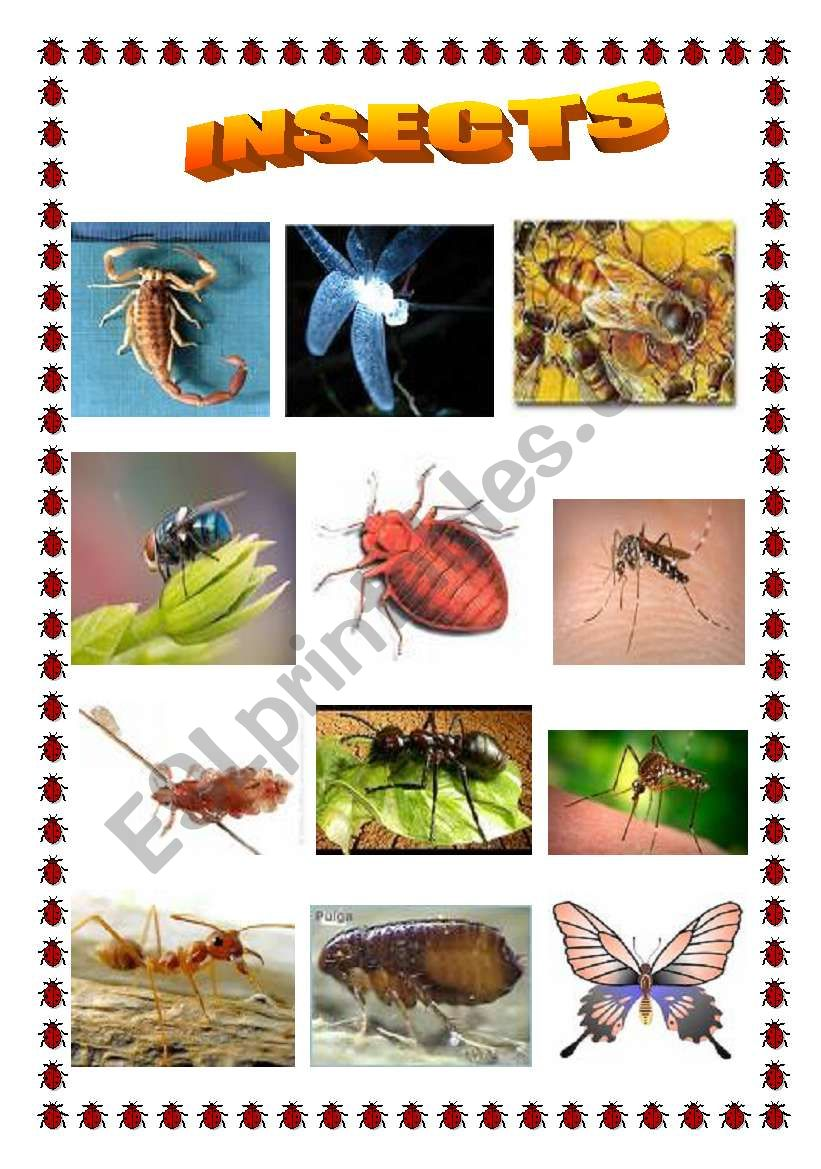 Insects worksheet