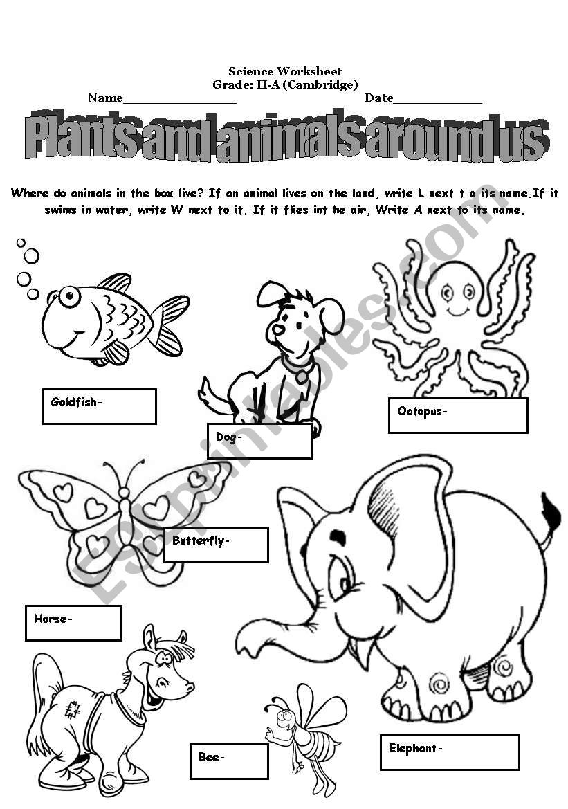 plants and animals around us esl worksheet by alina2. Black Bedroom Furniture Sets. Home Design Ideas