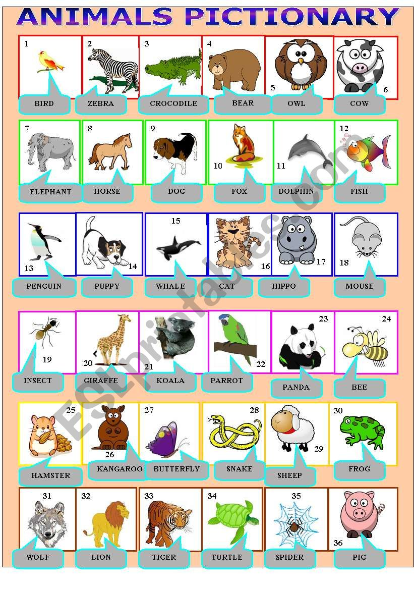 animals pictionary worksheet