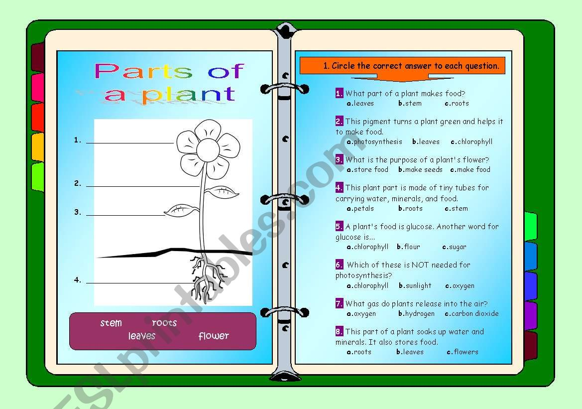 Parts of a plant - ESL worksheet by miry