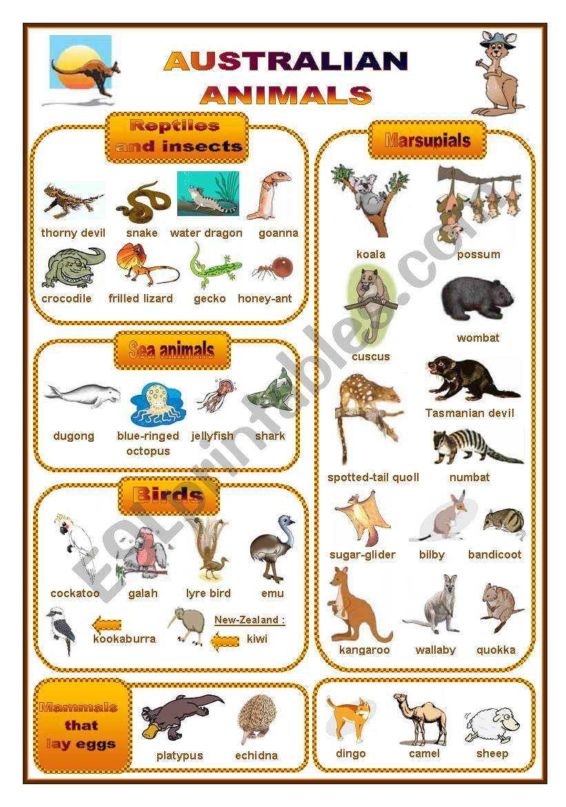 english worksheets australian animals a pictionary fully editable. Black Bedroom Furniture Sets. Home Design Ideas