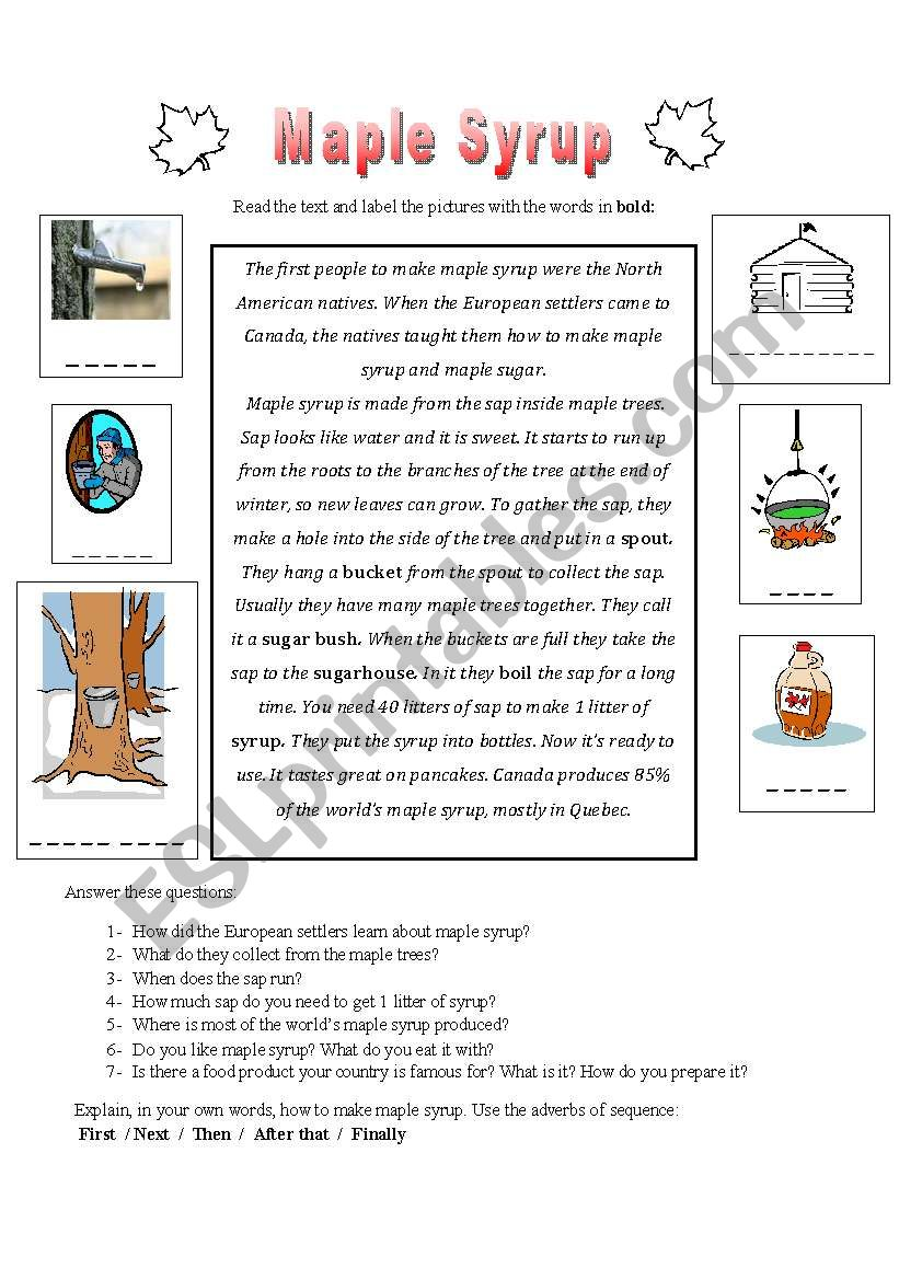 Maple Syrup worksheet