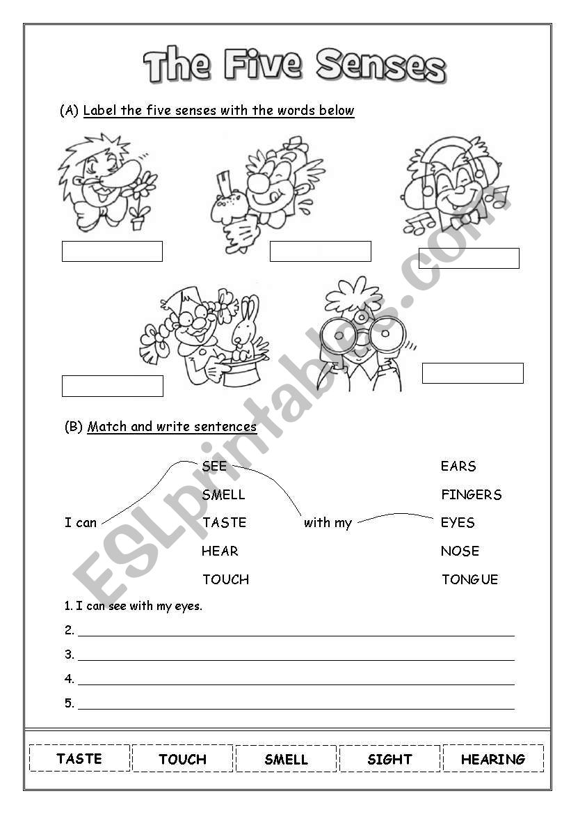 The Five Senses worksheet