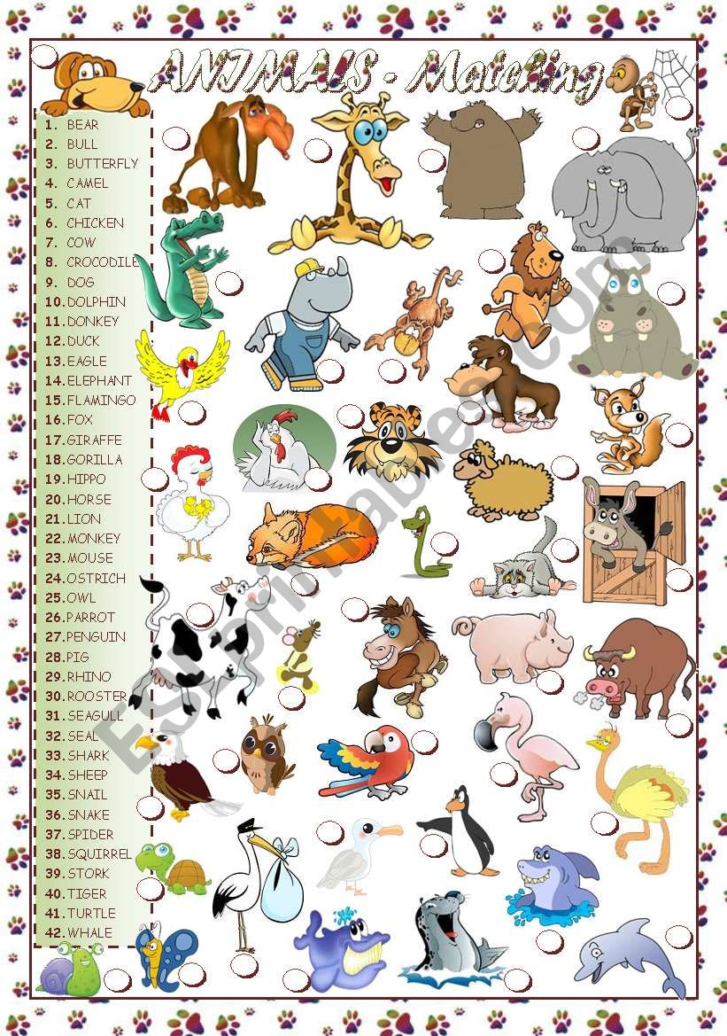 ANIMALS - MATCHING worksheet
