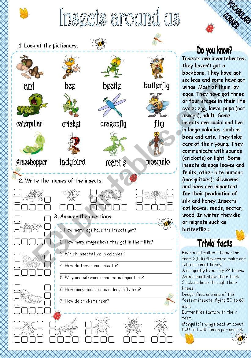 INSECTS AROUND US worksheet
