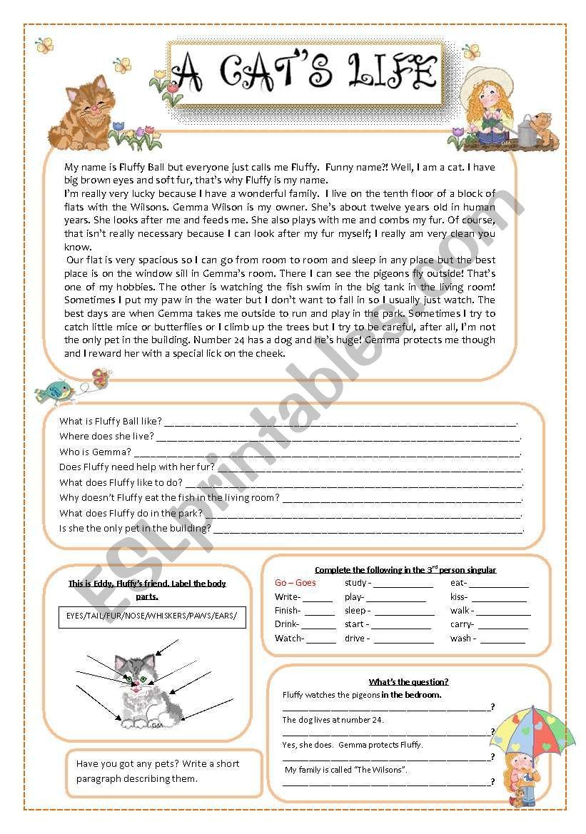 A cat´s life worksheet