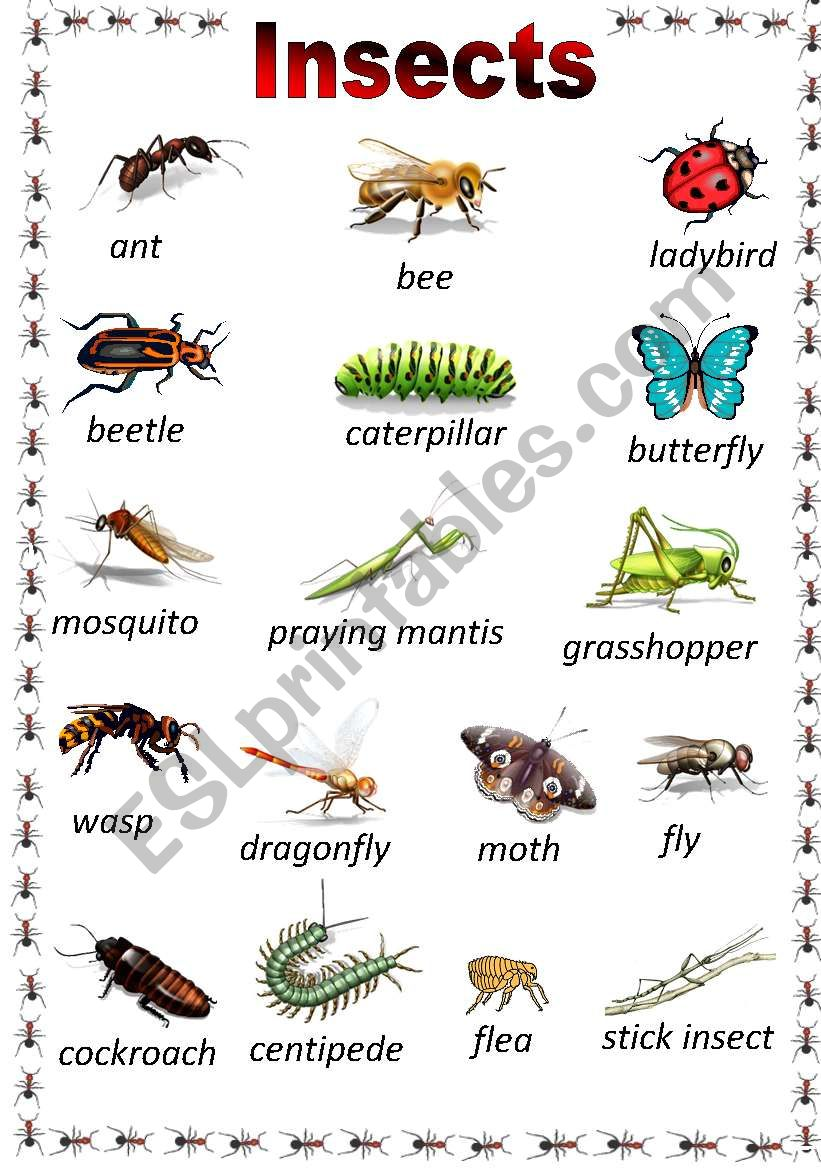 Insects Poster worksheet