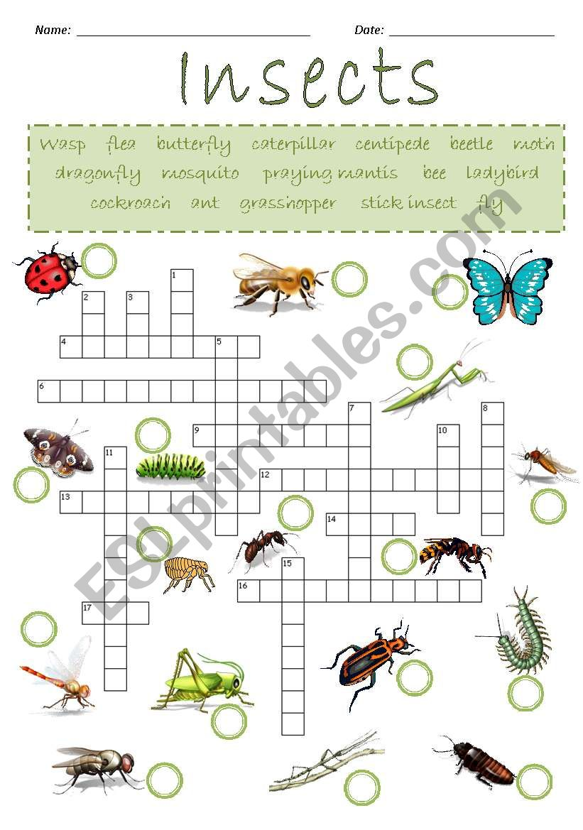 Insects Crossword Puzzle worksheet