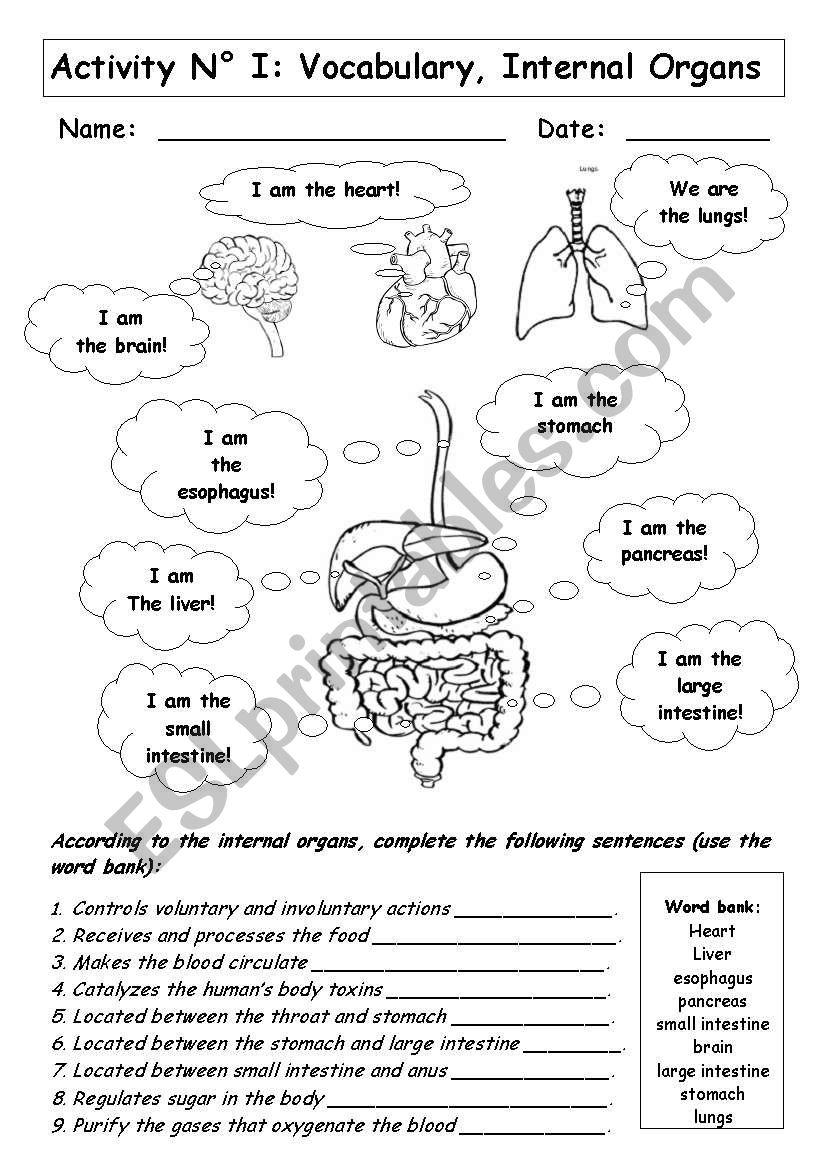 INTERNAL ORGANS worksheet