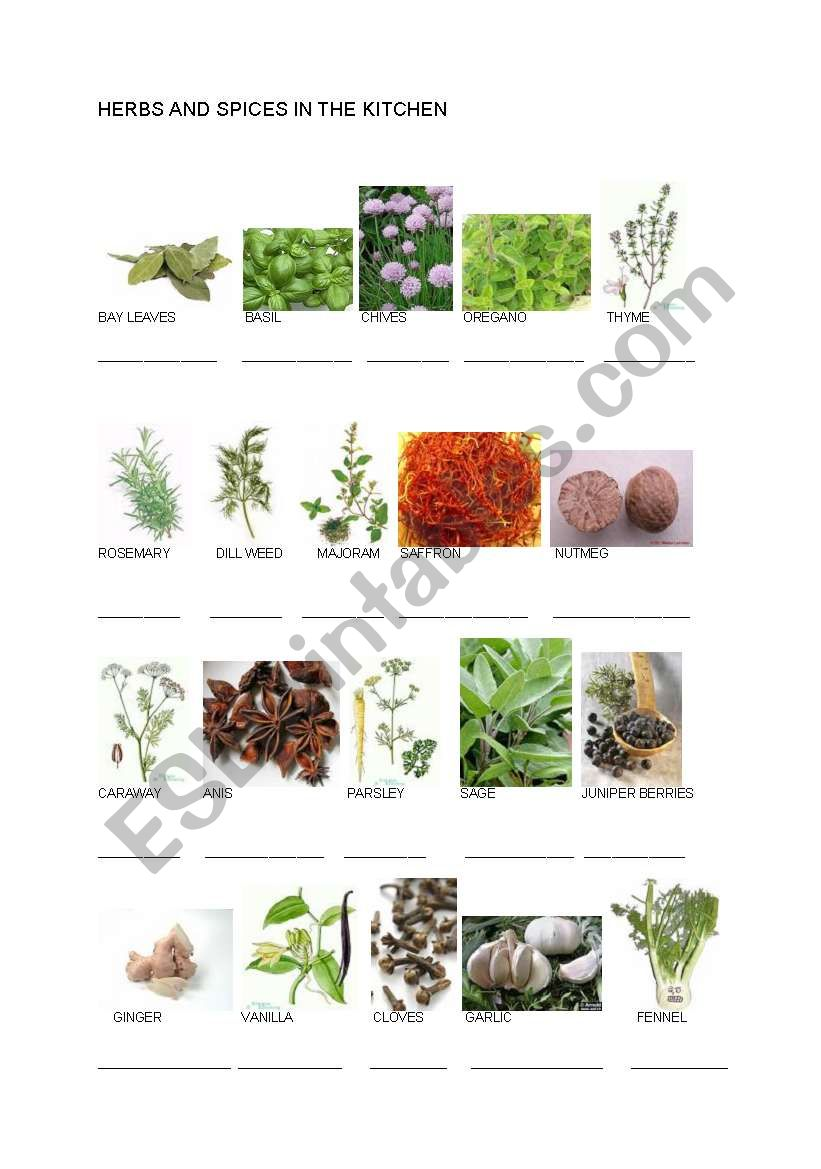 Herbs and spices in the kitchen