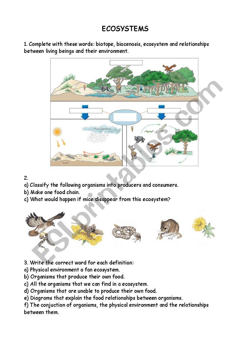 Ecosystems Esl Worksheet By Liz81