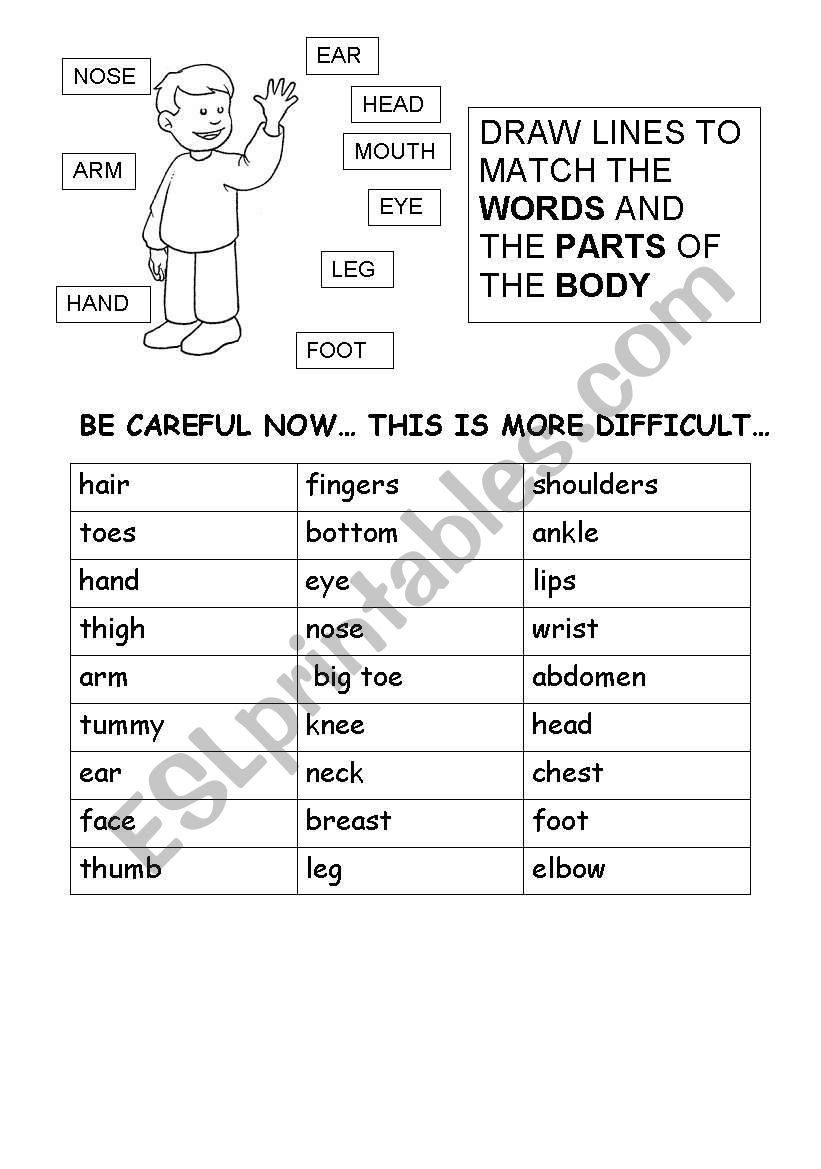 parts of the human body - ESL worksheet by carcarla