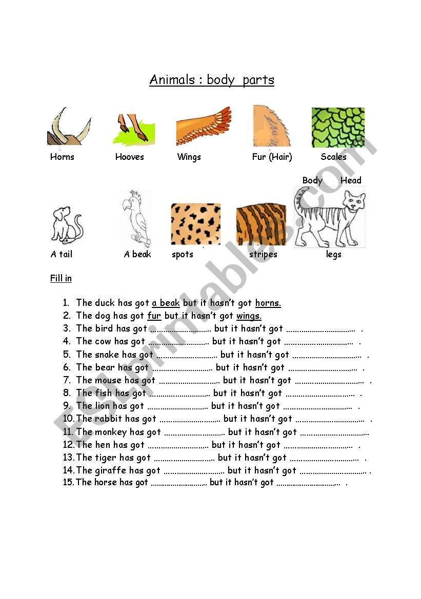 animals body parts worksheet
