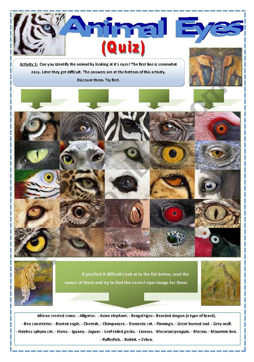 QUIZ - ANIMAL EYES - (7 Pages) with an interesting activity