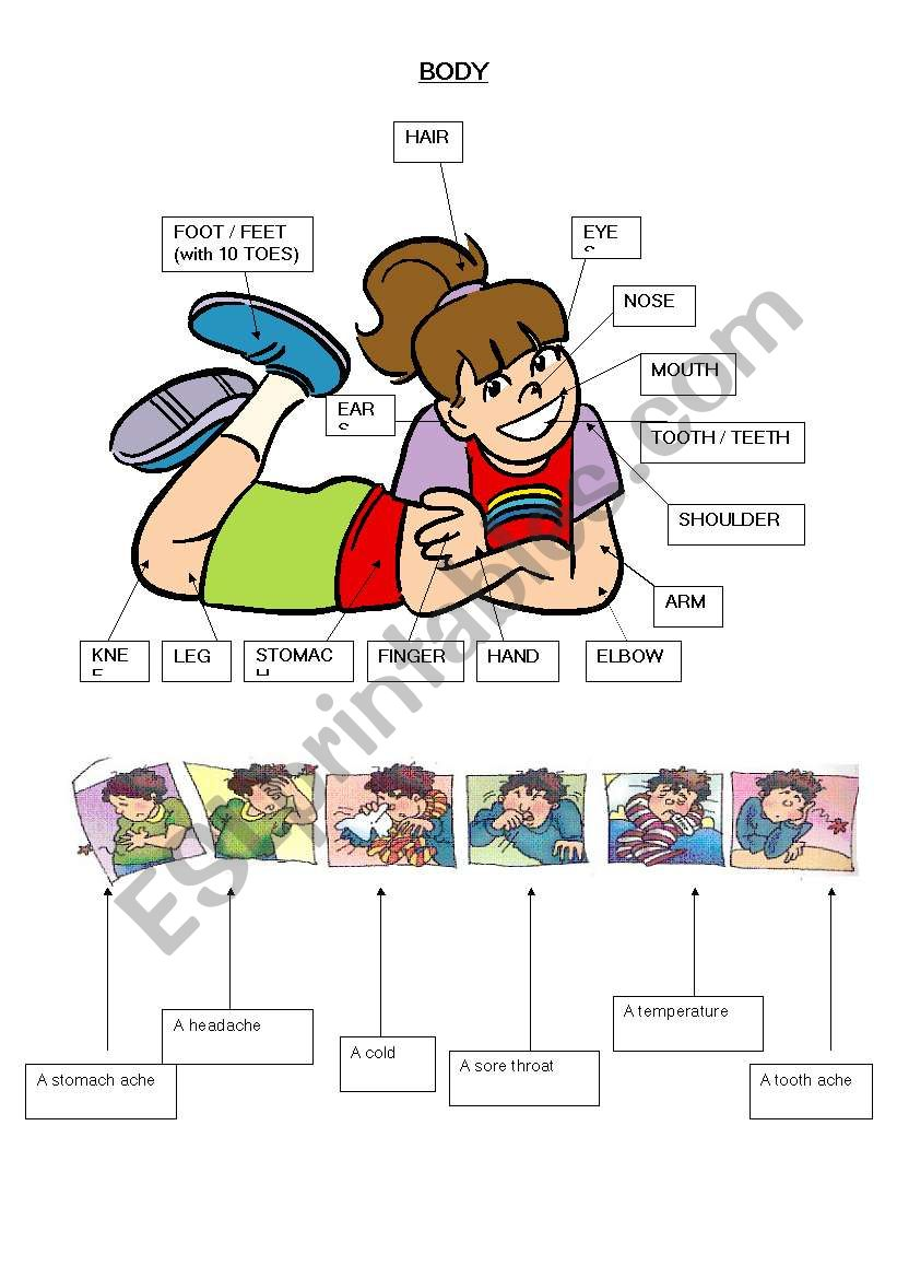 body vocabulary and illnesses worksheet